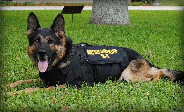 Martin County Sheriff's Office Canine
